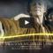 Cult'N'Click Awards Séries, Les meilleur(e)s acteur(rice)s de l'année 2015